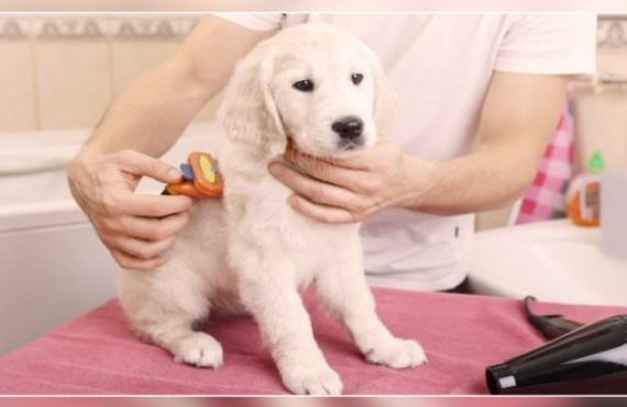 Title: 4 Ways to Take Care of Your Dog's Skin & Coat