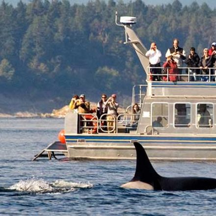 How to select the best whale watching tour operator – things you should check