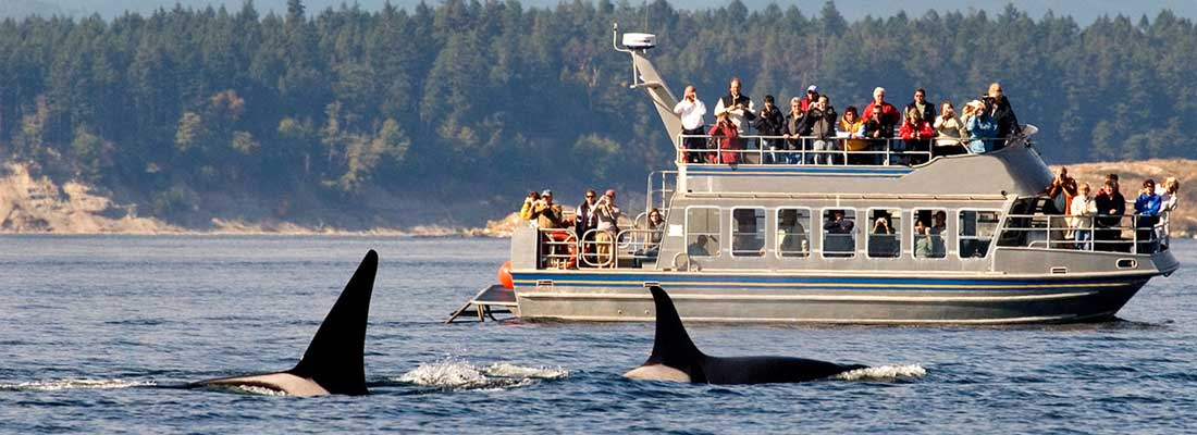 whale watching tour operator
